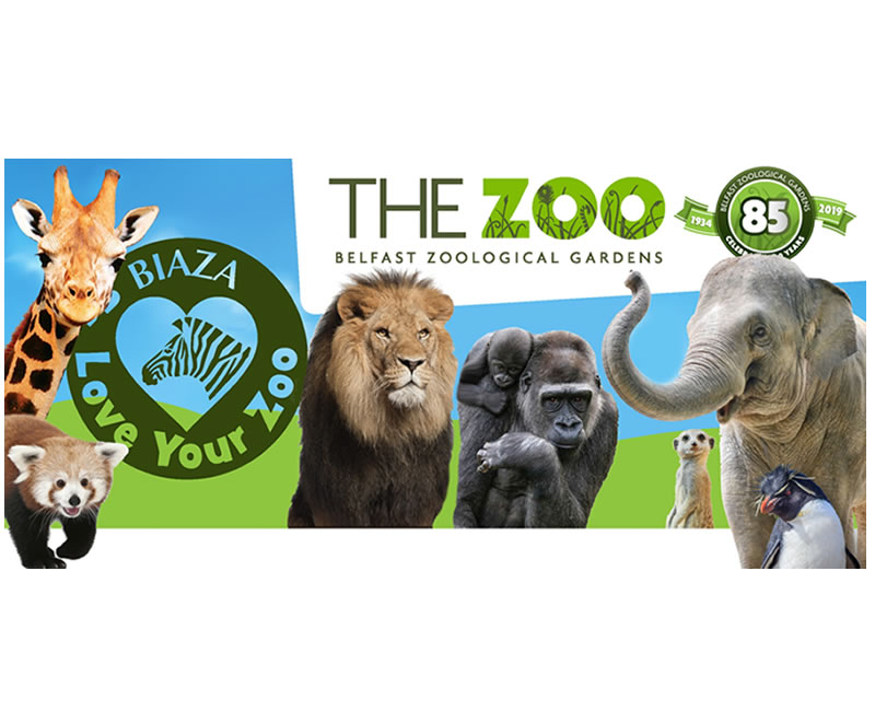 'Love Your Zoo' week at Belfast Zoo!