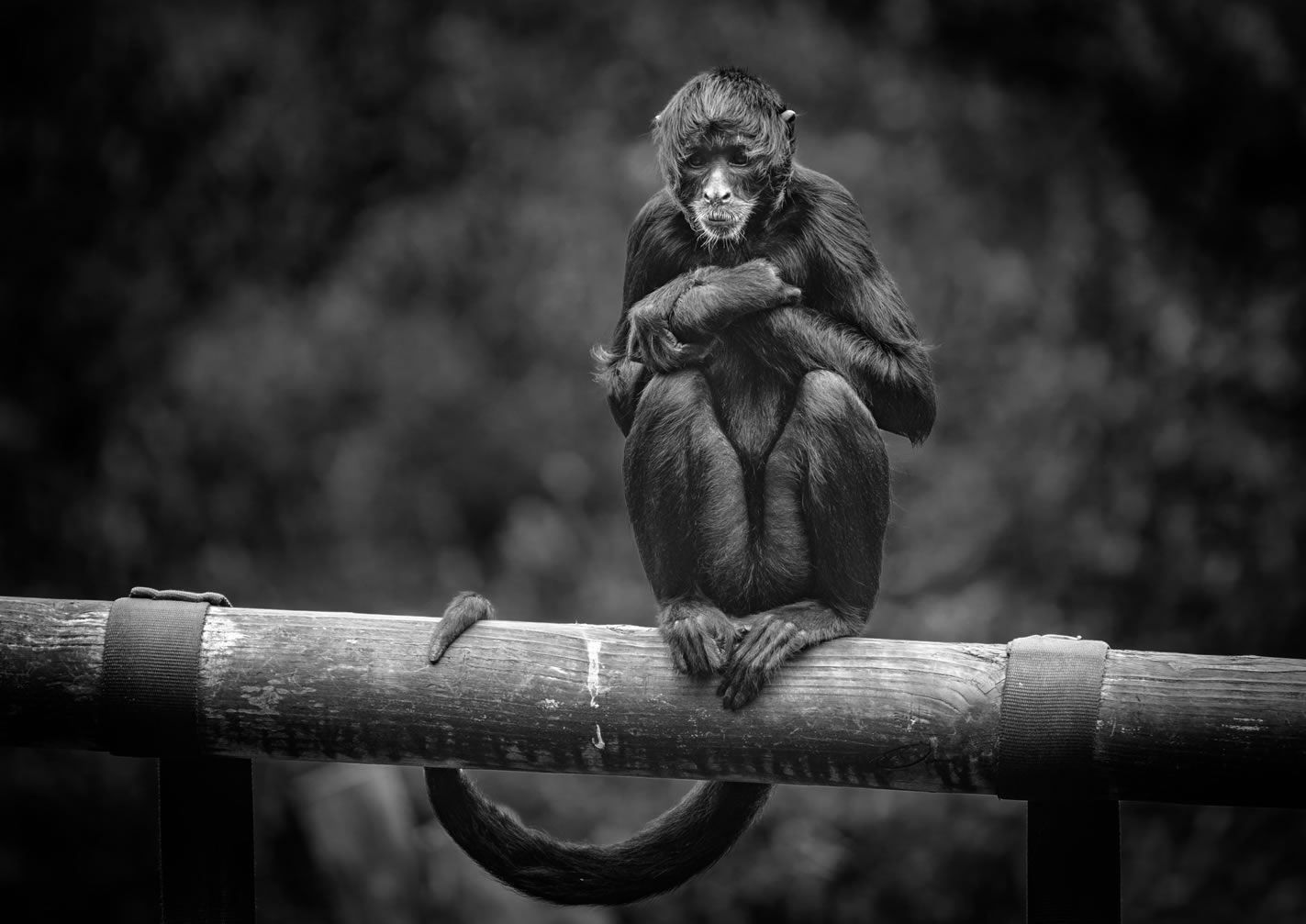 Belfast Zoo Photographic Competition Winners 2016